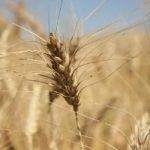 باورهای مردم آذربایجان در مورد قوراقلیق (خشکسالی)