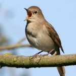 قوشلار ( پرنده ها ) – اوشاق لار اؤچؤن شعر