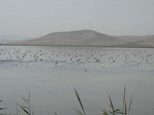 تالاب سولدوز ، شهرستان نقده – استان آذربایجان غربی