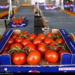 افتتاح بزرگترین مجموعه گلخانه ای کشور در منطقه آزاد ارس